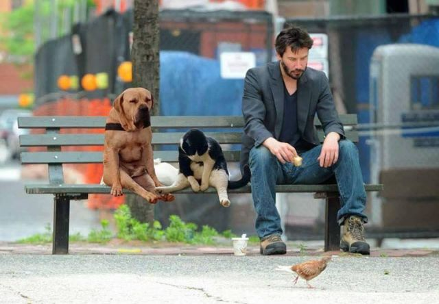 Waiting... - Funny pictures, memes - funvizeo.com - cute dog, cute cat, cute pet, john wick, keanu reeves