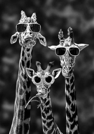 Stylish family with sunglasses