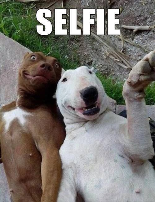 Selfie with my friend - Funny pictures, memes - funvizeo.com - funny dog pictures,funny pet,camera,selfie,pitbull
