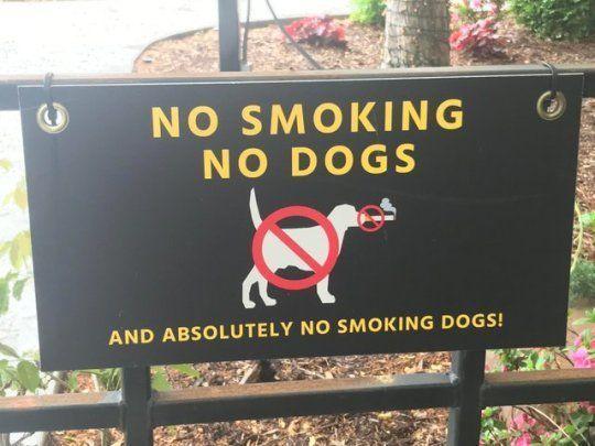No smoking dogs!