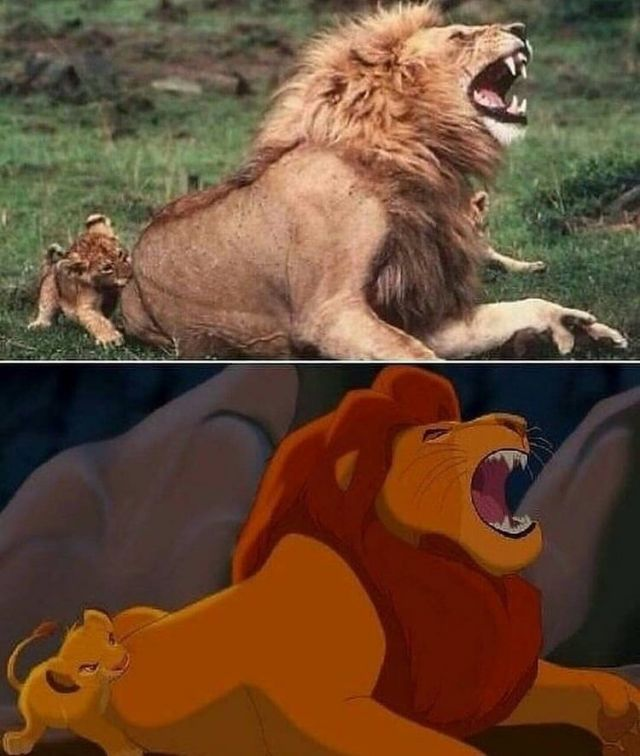 Funny Pictures - The Lion King