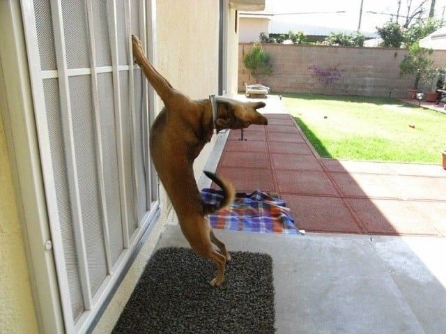 Please Let Me In - Funny pictures, memes - funvizeo.com - funny dog pictures,funny pet pipctures,door mats,knock the door