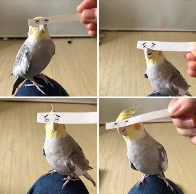 Funny eyes - Funny Videos - funvizeo.com - funny bird pictures,funny parrot,funny pet