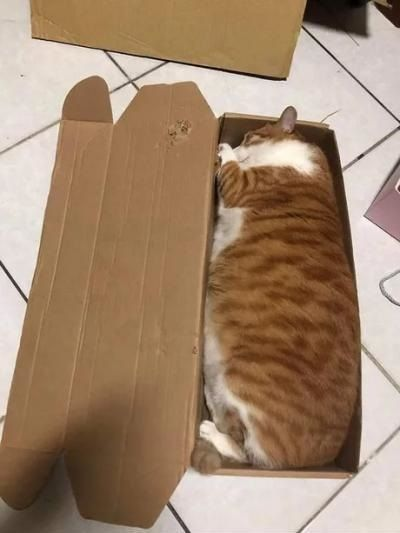 Favorite sleeping spot of cats - Funny Videos - funvizeo.com - sleeping cat,funny cat,box,carton box,funny pet