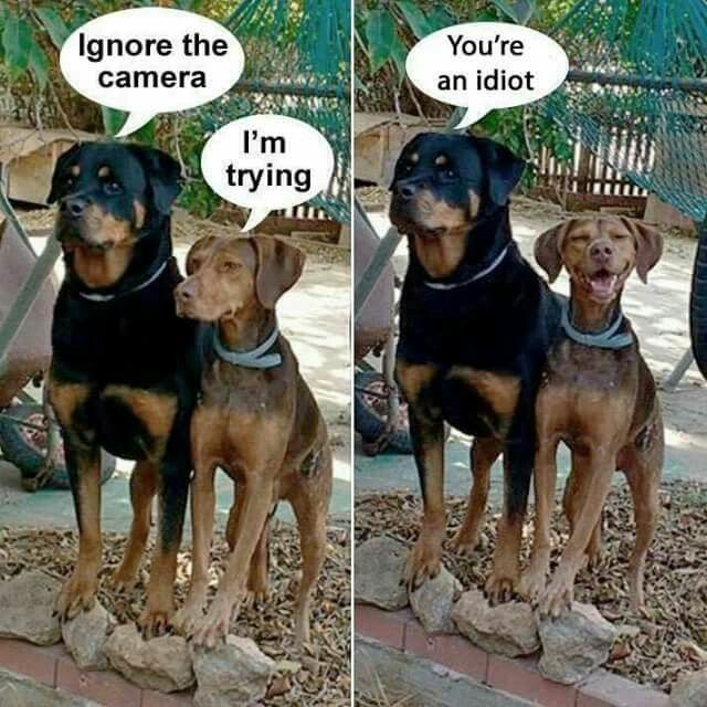 Why Do Dogs Hate Cameras? - video - funvizeo.com - funny dog pictures,camera,funny pet