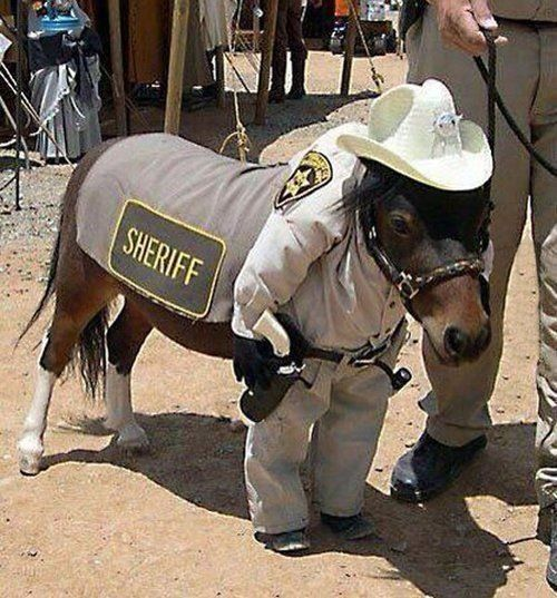 I'm the protector of justice - Funny pictures, memes - funvizeo.com - funny horse pictures, cosplay, police, funny animal pictures