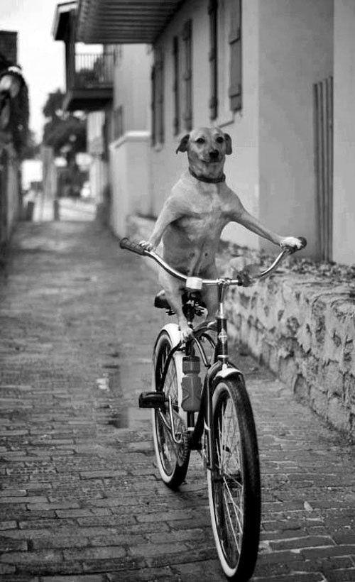 i love riding my bike