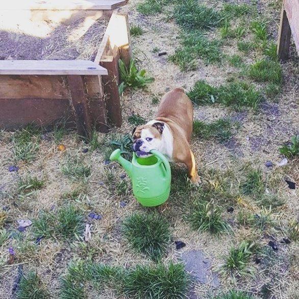 He loves gardening