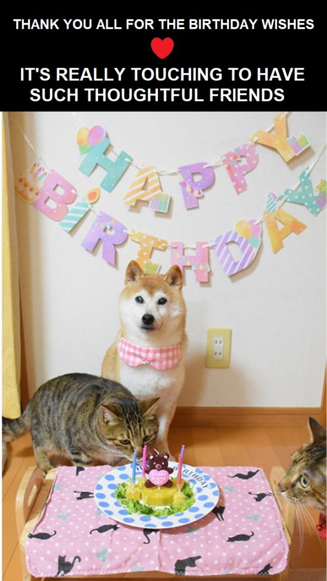 Cute funny thank you for birthday wishes meme