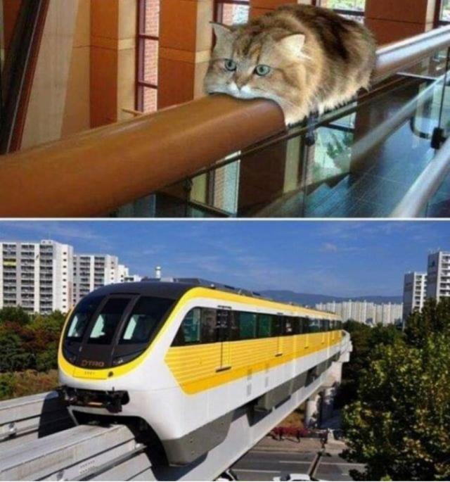 I'm A Train Meme
