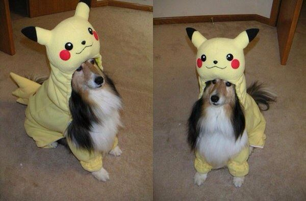 I'm pikachu - Funny pictures, memes - funvizeo.com - rough collie, dog, pet, pikachu, cosplay