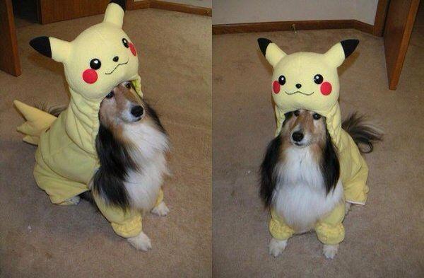 I'm pikachu - Funny Videos - funvizeo.com - Rough Collie, dog, pet, pikachu, cosplay