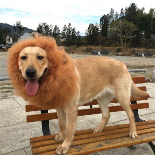 I'm a lion, haha - Funny Videos - funvizeo.com - dog, pet, lion