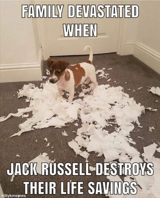 Funny toilet paper memes