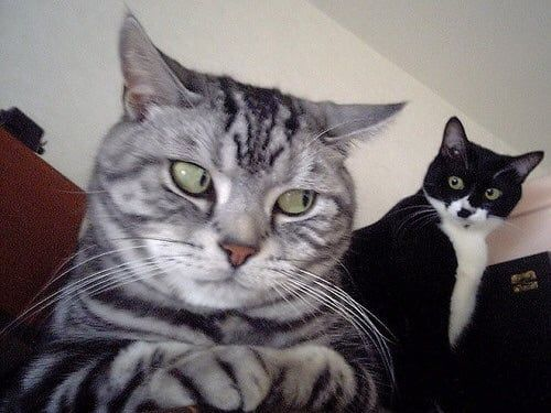 Funny cat face - Funny pictures, memes - funvizeo.com - funny cat pictures,funny pet,face