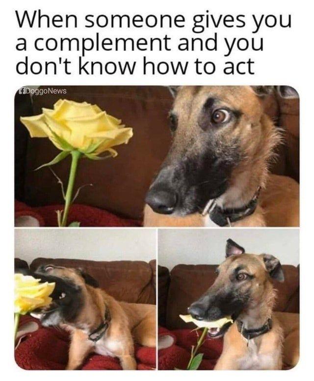 Funny dog meme - Funny pictures, memes - funvizeo.com - funny,memes,dog meme,flower