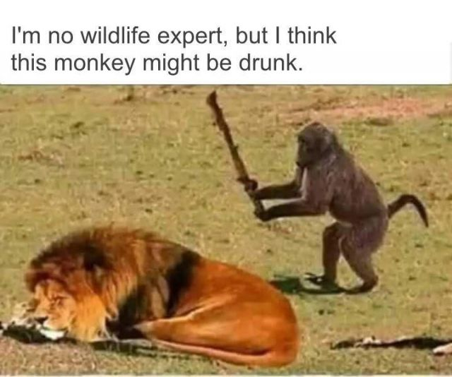 Funny Monkey Pictures - Funny Videos - funvizeo.com - funny pictures,funny animal pictures,monkey