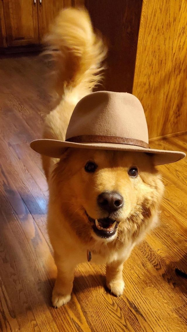 Perfect hat for long face - Funny pictures, memes - funvizeo.com - cute dog pictures,hat,cute pet