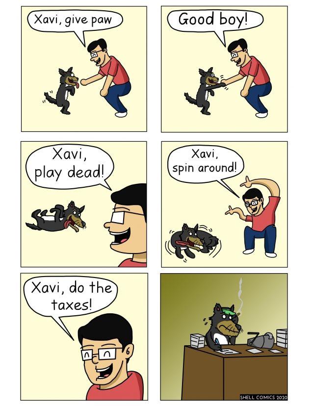Smartest Dog Ever - Funny pictures, memes - funvizeo.com - comics,funny,tax,funny dog