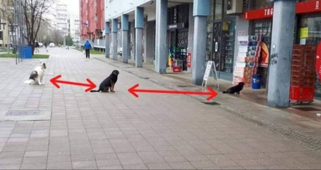 It's Time To Get Serious About Social Distancing - Funny pictures, memes - funvizeo.com - social distancing,funny dog pictures,funny pet,funny