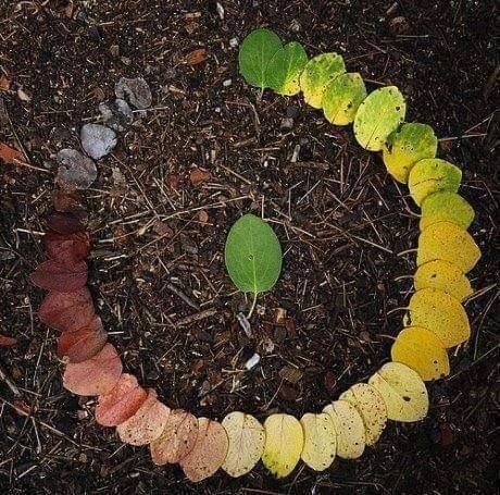 The Life Cycle Of Leaves