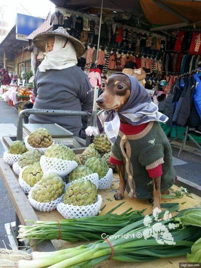 Adorable dog!