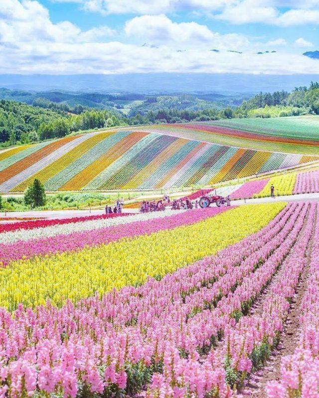 Beautiful flower fields