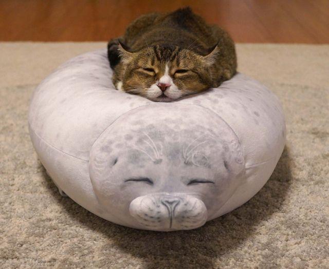 Cute cat sleeping on seal cushion