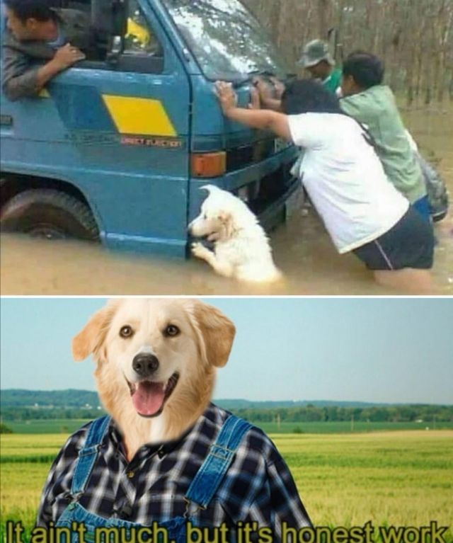 Man's best friend - Funny pictures, memes - funvizeo.com - memes,funny,funny pictures,cute dog