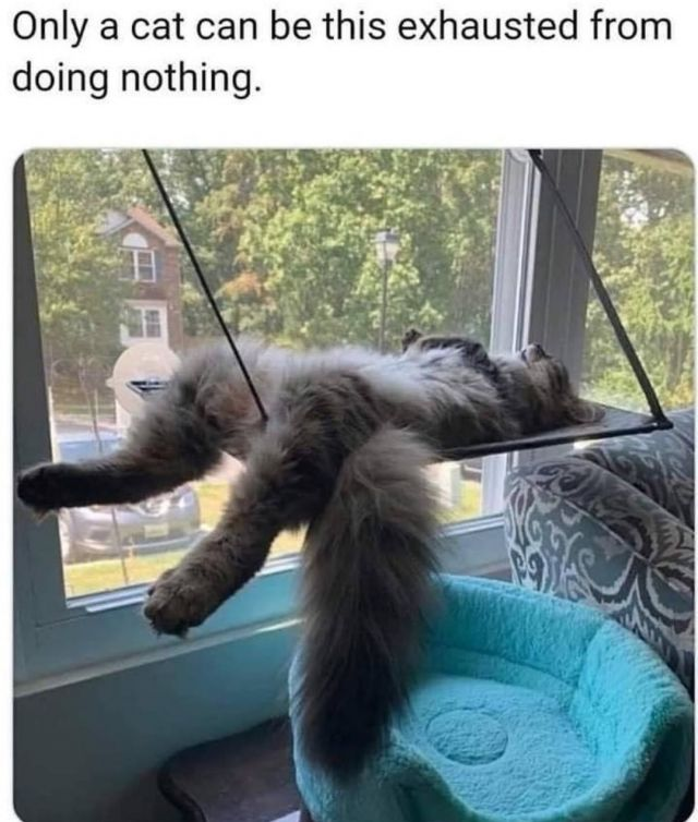 Only a cat can be this exhausted from doing nothing