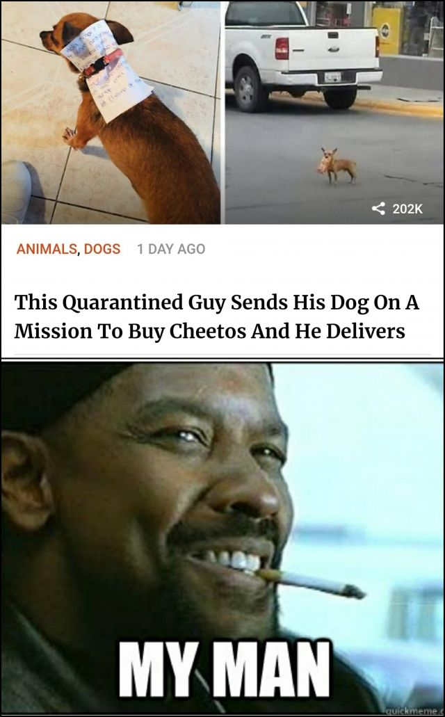 Dog on mission to buy Cheetos - Funny pictures, memes - funvizeo.com - memes,funny,dog meme,quarantine