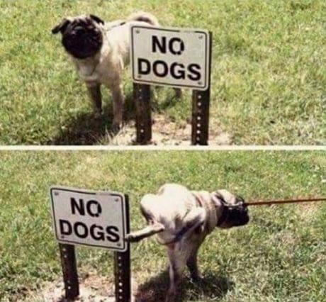 No Dogs, haha