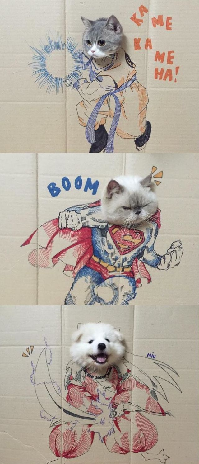 Super hero - Funny pictures, memes - funvizeo.com - cosplay,cat, dog, pet, adorable