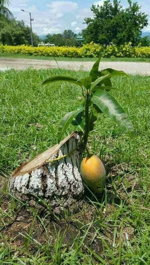 Wonderful Life - Funny pictures, memes - funvizeo.com - mango, life, tree, wonderful, funny