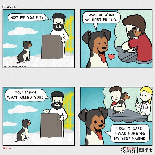 Dog goes to heaven comic - Funny pictures, memes - funvizeo.com - comics,funny,heaven