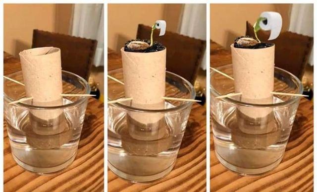Toilet Paper Tree Planting