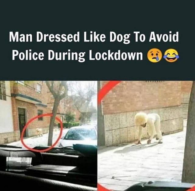 Man dressed like dog to avoid police during lockdown - Funny pictures, memes - funvizeo.com - funny,meme,lockdown,police,dog