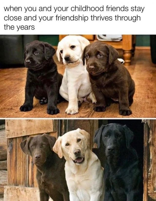 When you and your childhood friends stay close and your friendship thrives through the years - Funny pictures, memes - funvizeo.com - funny,funny pictures,funny dog,funny pet,friendship