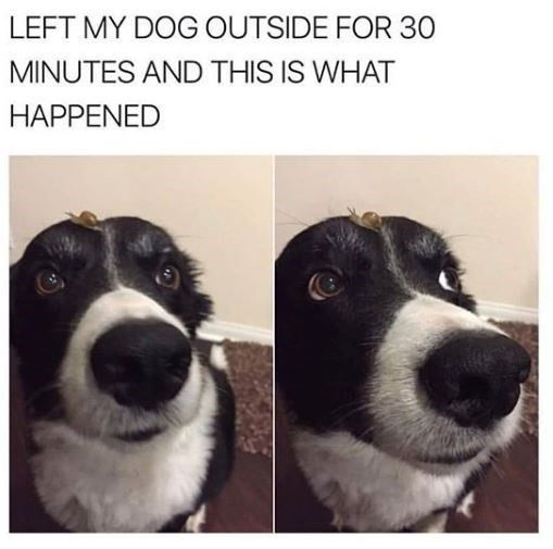 Left my dog outside for 30 minutes and this is what happened - Funny pictures, memes - funvizeo.com - memes,dog meme,funny,funny dog,snail