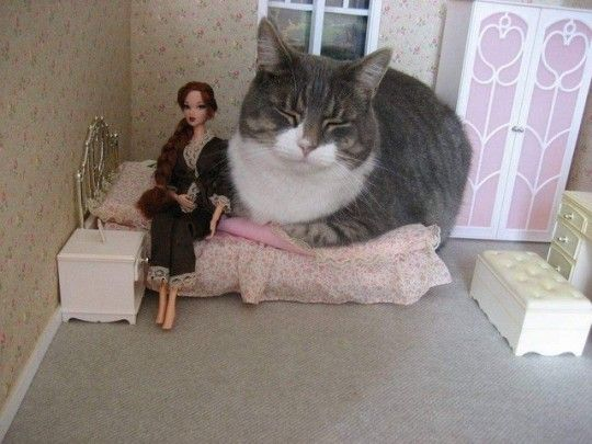 This is really how it feels with your cat in your bed