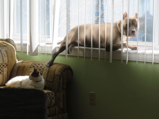 Dog Like Sunbathing So Much - Funny pictures, memes - funvizeo.com - funny dog pictures,funny pet,sunbathe,window
