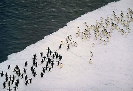 The Great Penguin War