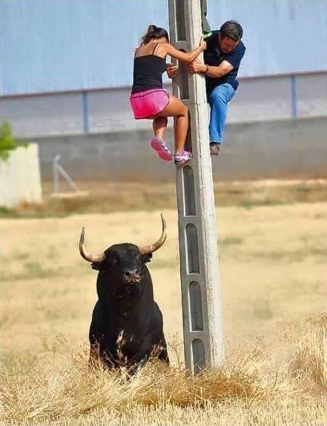 Hide-and-seek - Funny Videos - funvizeo.com - bull, utility pole, animal, hide