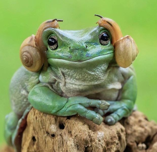 Sharp Sounds - Funny pictures, memes - funvizeo.com - frog, snail, headphone, animal