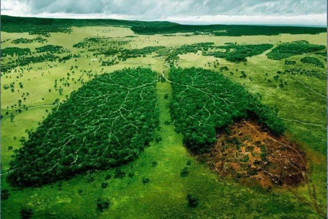 Forests - Our Green Lungs