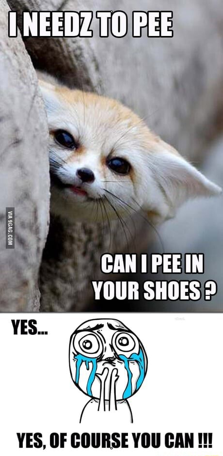 NEEDZ TO PEE CAN PEEIN YOUR SHOES YES, OF COURSE YOU CAN meme