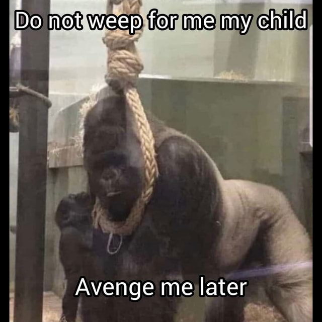 Do not weep for me my child Avenge me later memes