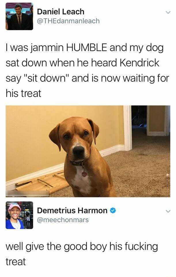 I was jammin HUMBLE and my dog sat down when he heard Kendrick say sit down and is now waiting for his treat Demetrius Harmon and meechonmars. well give the good boy his fucking treat meme