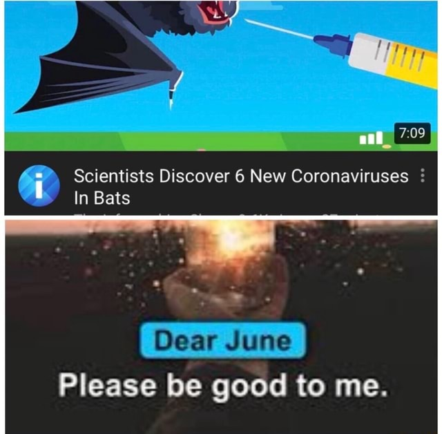 Scientists Discover 6 New Coronaviruses In Bats Dear June Please be good to me memes