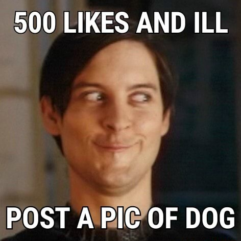 500 LIKES AND ILL POST A PIC OF DOG memes